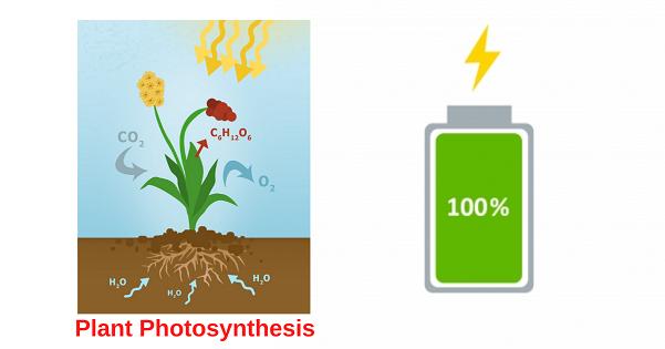 Plant Photosynthesis